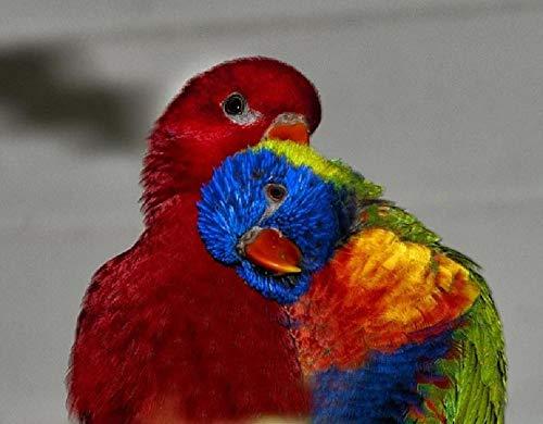 Doe-het-zelf digitale olieverfschilderij vogels Lori Animal Lori uitloop rood