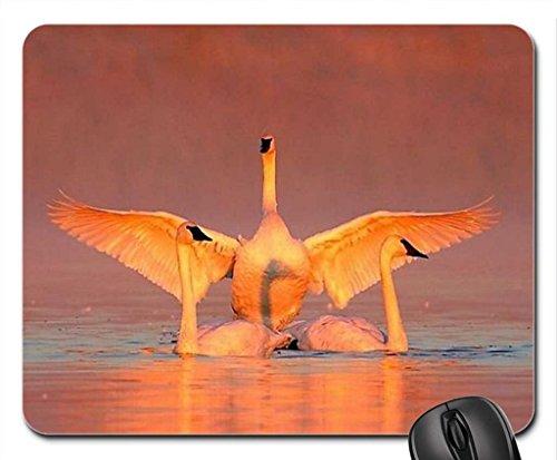 Swans In Water Mouse Pad, Tapis de Souris