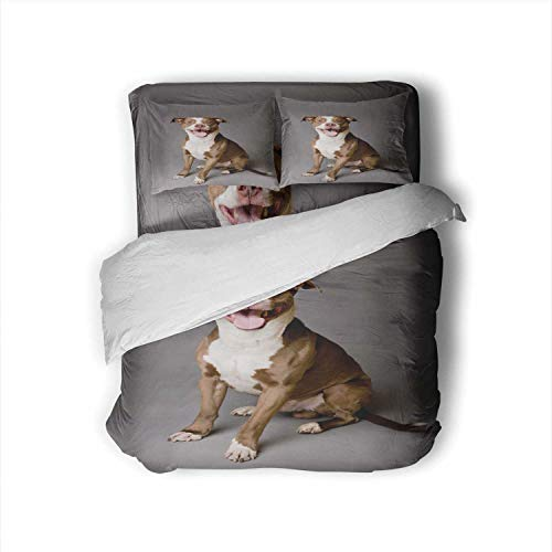 C COABALLA Happy Pit Bull Dog on Gray Dog,Hotel Luxury Queen Size Bed Sheets Set- Fade Resistant Muscular Build Queen