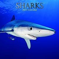 2021 壁掛けカレンダー サメカレンダー 12 x 12インチ マンスリービュー 16か月 動物テーマ リマインダーステッカー180枚付き