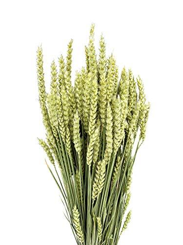 Weizen getrocknet | Trockenblumenstrauß | Deko Blumen | Trockenblumen | 100% natürlich und nachhaltig | mindestens 3 Jahre Haltbarkeit | 65 cm lang