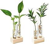 2pcs Florero de Vidrio hidropónico Yangbaga , Jardinera de Vidrio de Escritorio Soporte de Madera y Plantas Verdes Estación de propagación de Flores para Decoración de la Oficina del jardín del hogar