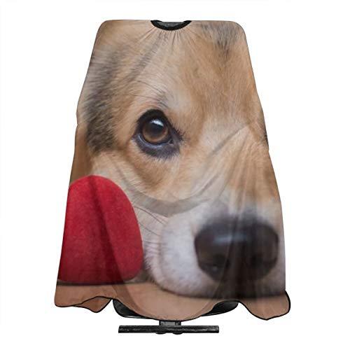 Barbero profesional-Un perro con una capa roja para el salón auditivo con cierre a presión para cortar el cabello, 55'x 66'