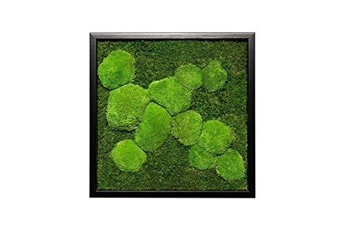 Moosbild Pflanzenbild mit Flachmoos und Kugelmoos versch. Maße günstig