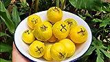 zumari 20 semillas de fruta de guayaba cereza amarilla