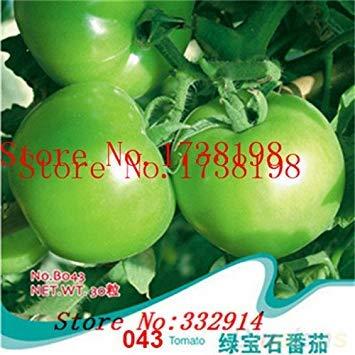 Vistaric ¡Venta!Tomate italiano de árbol 100 * RARO SALÓN !!* SEMILLAS Semillas Vegetales DE LA VIDA TOMATE ÁRBOL GIGANTE