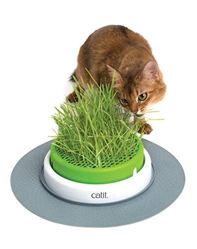 Catit Senses Grass Planter Cat Grass Kit - Pack of 3 for the Senses Grass Planter