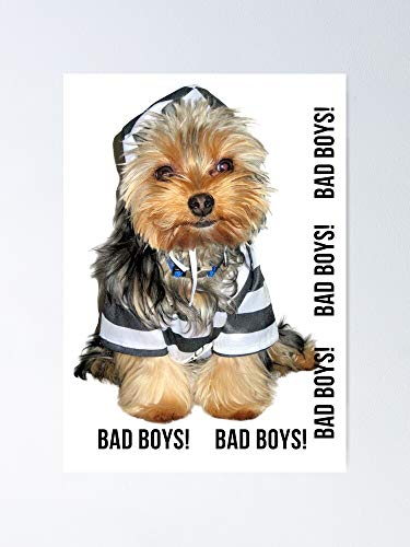 AZSTEEL Yorkie Bad Boys Poster