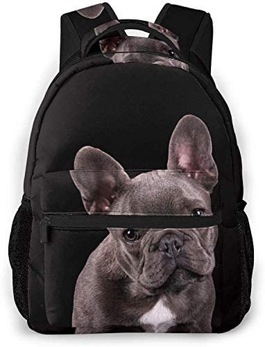 Funny sloths dressed up in winter style Basic Travel Laptop Backpack Cool School Bag-French Bulldog on Dark