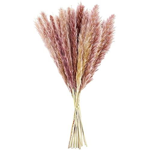 Tianbi 15 piezas de pampas secas, hierba de pampas naturales secas, ramo de flores secas para el hogar, oficina, decoración de boda, arreglo de flores, 55 cm