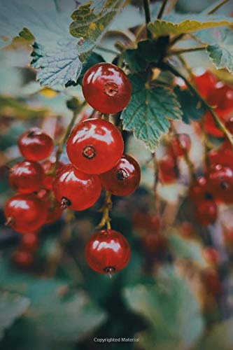 Journal: Currants Fruit Berries Berry Garden Red Green Plant Gardening Preserves Jam Preserving Wine Vinegar Ball Currant Fruiting