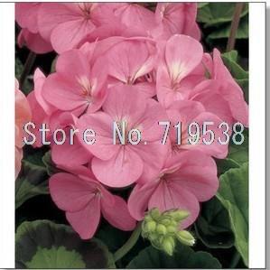 graine de hydrangea commune, Balcon pot variétés de semences de fleurs d'hortensia ont 24 couleurs -10 graines / paquet