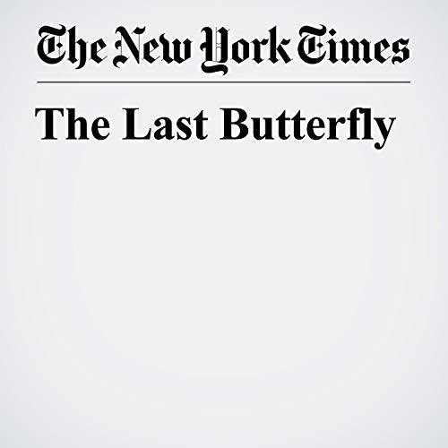The Last Butterfly copertina