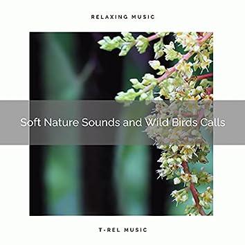! ! ! ! ! Soft Nature Sounds and Wild Birds Calls