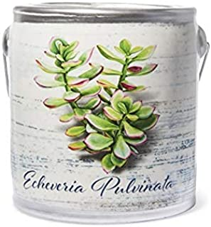 A Cheerful Giver - Echeveria Pulvinata- Almond Butter Pound Cake Scented Jar Candle (20 oz) Decorative Ceramic Jar Candle ...