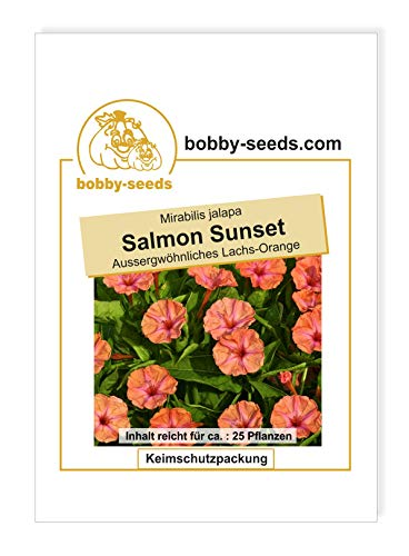 Mirabilis Salmon Sunset von Bobby-Seeds Portion