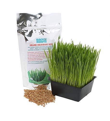 Back to the Roots Organic Cat Grass Wheatgrass Seeds
