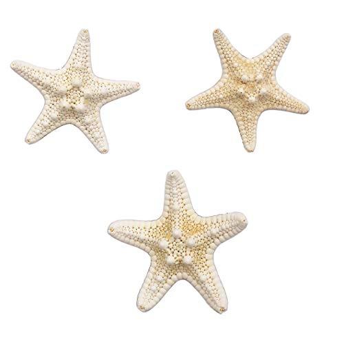Real Starfish Hair Clip Handmade Natural Sea Star Hair Pins Barrettes for Women Girls Random size (White)