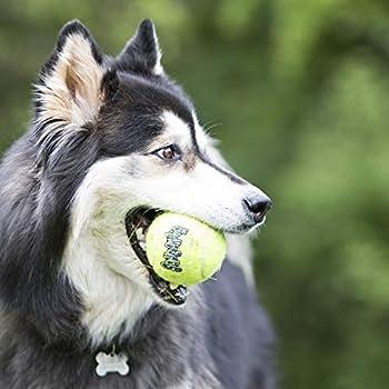 KONG - Squeakair Balls - Balle de Tennis couineuse, n'abîme Pas Les Dents - pour Chien Grande Taille (2 Paquets)
