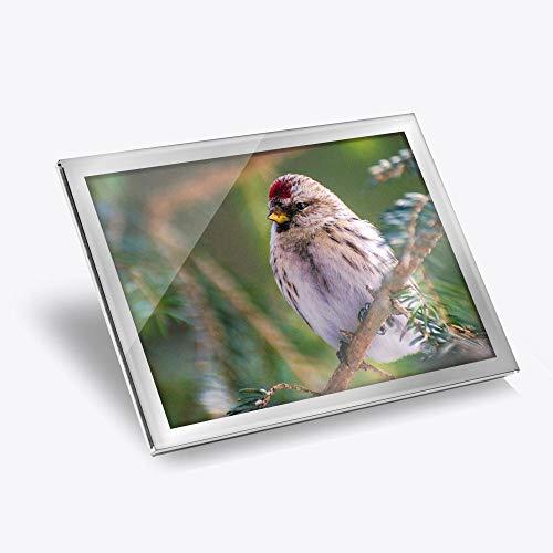 Redpoll Redcap Bird Nature Workplace/Table Mat / Dining Mat / Wipeable/Waterproof #24098 - Mantel de vinilo (20 x 25 cm), color plateado