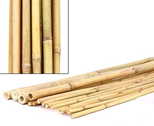 bambus-discount.com Bambú Tubos tonkín, Amarillento, Natural, Mediante. 3,5de 4cm, Longitud 300cm