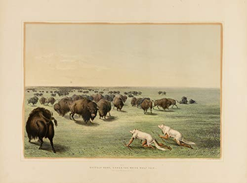 Póster impreso de George Catlin: Buffalo Hunt, Under the White Wolfskin No. 13, vintage obras de arte de América Occidental, 24 x 17 pulgadas (A2)