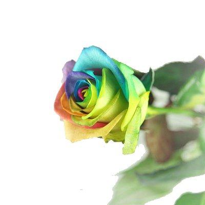 Regenbogen Rose - Langstielige mit Beargrass dekorierte bunte Rose
