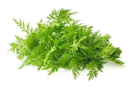 Einjähriger Beifuß Artemisia annua Qing Hao 1.000 Samen Graines Sementes Semi Seeds