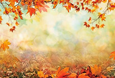 DORCEV 7x5ft Vinyl Photography Backdrop for Thanksgiving Party Background Meadow Fallen Maple Leaves Sunshine Baby Shower Wedding Party Portraits Photo Studio Props Vinyl Wallpaper