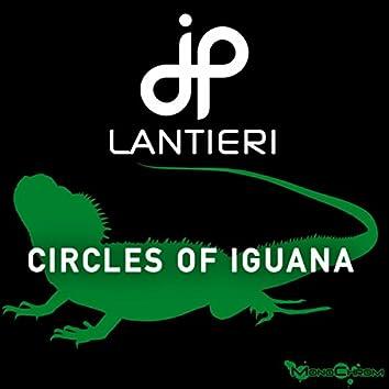 Circles Of Iguana