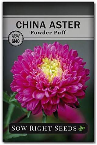 Seeds Powder Puff China Aster