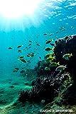 Cuaderno de Submarinismo: Cuaderno de Tamaño A5 Para Apuntar Todas Tus Inmersiones   Con Espacio...