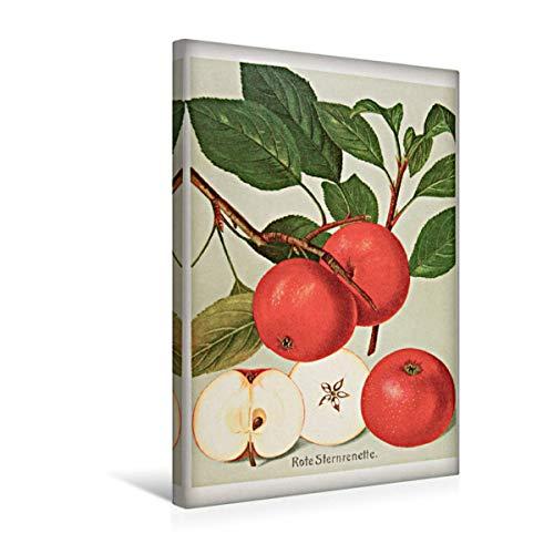 CALVENDO Premium Textil-Leinwand 30 x 45 cm Hoch-Format Rote Sternrenette, plattdeutsch: Steernappel, Leinwanddruck von Jost Galle