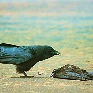 Ravens in July