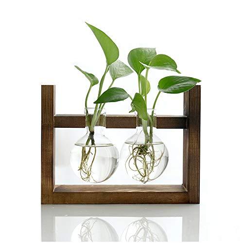 Ivolador Propagation Station Glas Pflanzer Terrarium Vase mit Retro Holz Stand für Hydroponik Pflanzen Home Küche Desktop Tisch Indoor Garden Wedding Decor (2 Bulb Vase)