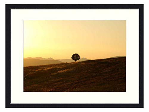OiArt Wall Art Print Wood Framed Home Decor Picture Artwork(24x16 inch) - Tree Solitary Landscape Umbria Setting Sun Sunset