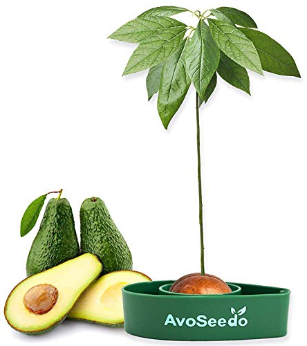 avocado lover gifts