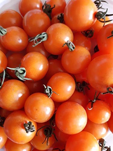 Semillas tomate cerezo naranja-novedad.