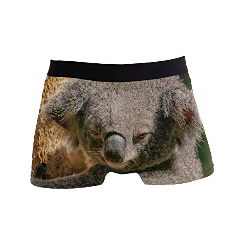 PINLLG Herren Boxershorts Koala Bär, niedlich, Polyester, Spandex Gr. M, Mehrfarbig