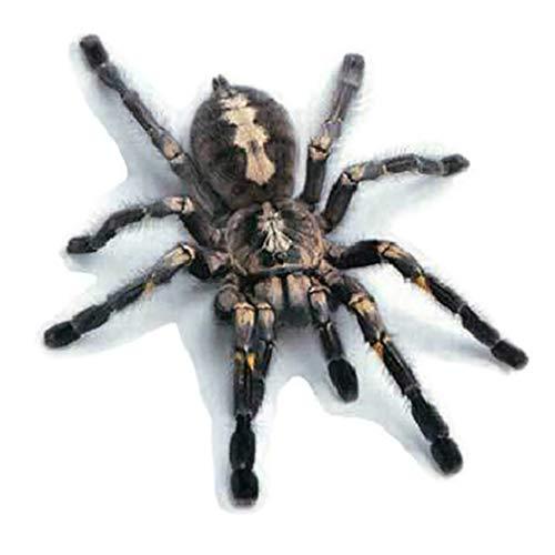 KaariFirefly 3D Car Sticker Simulation Animal Bumper Door Decor Scorpion Spider Lizard Decal - Black Spider