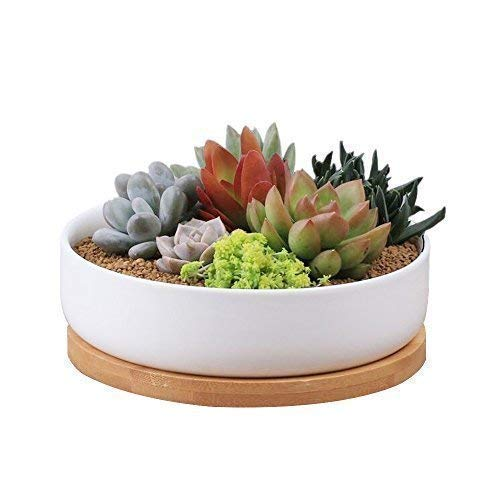Binwen 6.3 inch Round Ceramic White Succulent Cactus Planters Pots with Drainage Bamboo Trays - Plants Not Included