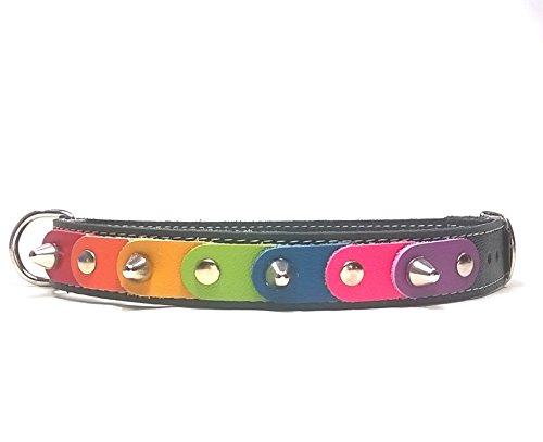 Superpipapo Original Collar para Perros, Todas Las Tallas, Correa Opcional, Diseño Orgullo Gay con los Colores Arcoiris Arco-Ciel, Mediano, 45 cm M -Cuello 35-40 cm, Ancho 20mm