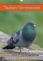 Tauben Terminplaner (Wandkalender 2022 DIN A3 hoch): Echte Schoenheiten (Planer, 14 Seiten )
