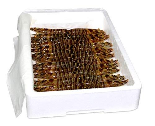 Langostino, HUELVAMAR, VIVO, 30/40 piezas por kilo - Caja de1 kg.