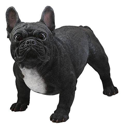 Ebros Adorable Large Lifelike Realistic Black French Bulldog Statue with Glass Eyes 19.5' Long Frenchie Figurine Pedigree Breed Animal Theme Dogs Puppy Puppies Sculpture