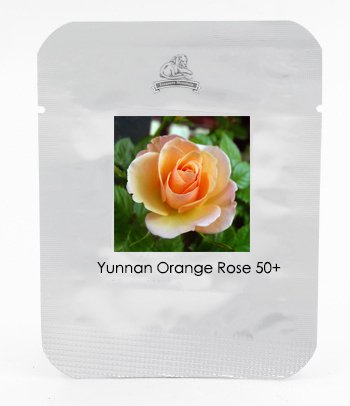 KK 1 Grand emballage, 50 graines, semences Yunnan orange Rose Plant # NF425
