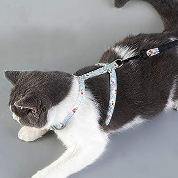 Ensemble harnais et laisse pour chat – Belle laisse réglable en coton et nylon – Idéal pour chaton lapin chiot