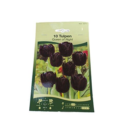 Tulpen Zwiebeln verschiedene Sorten, Garten (Queen of Nigt 10 Zwiebeln)