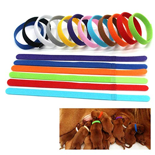 Dierbenodigdheden Hondenhalsband Adhesive Tape 12 kleuren Dog ID Tag Kraagaccessoires Zacht materiaal Nylon Pet Cat Puppy Dog, S 10x200mm