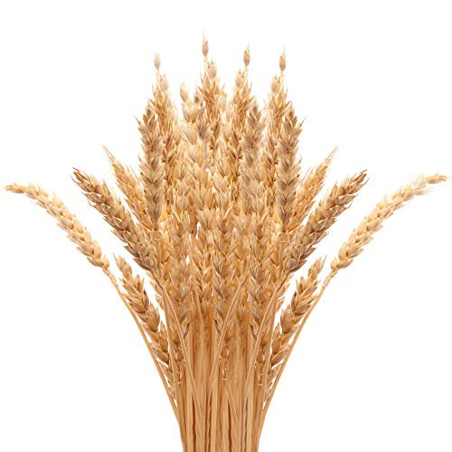 Golden Dried Wheat Sheaves 100 Stems Bundle Premium Autumn Arrangements Full Wholesale DIY Home Table Wedding Xmas Halloween Decoration